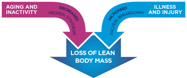 lean-body-mass-chart