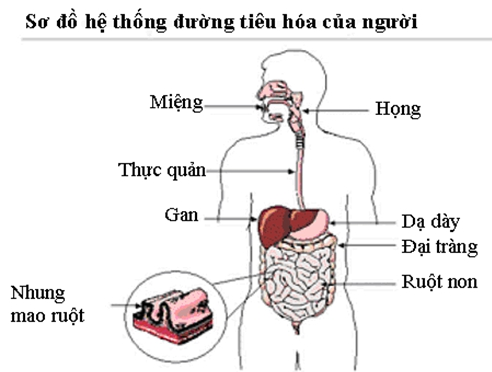 dinh-duong-ung-thu