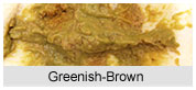 Greenish Brown Baby Poop