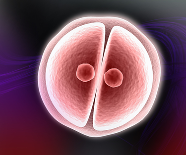 embryo developing