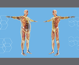 Computer graphic renders of normal and overweight body types
