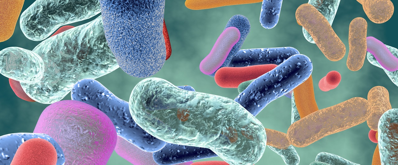 A collection of healthy bacteria in the microbiome