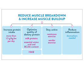 A slide discusses ways to reduce muscle breakdown and crease muscle buildup, such as increasing protein intake, optimizing quality of dietary protein, staying active, and reducing inflaming.