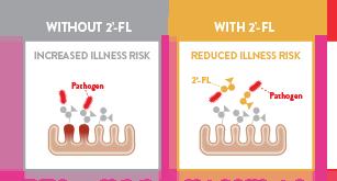 2FL-prebiotic