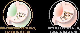 protein-digest