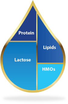 HMOs are the third most abundant component of breast milk (excluding water).
