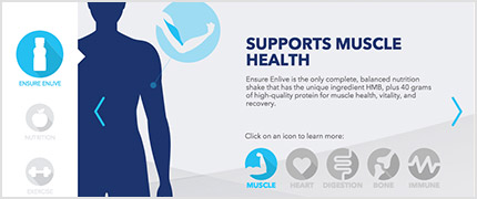 Human silhouette with caption reading: supports muscle health