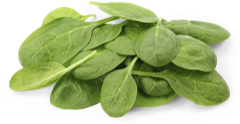 Pureed Spinach